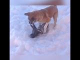 Вы когда-нибудь видели кота, так весело резвящегося в снегу?! ❄️ 😺
