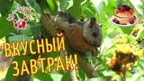 Белочка ест ягоды на дереве в КОСТА РИКЕ Животные КОСТА-РИКА