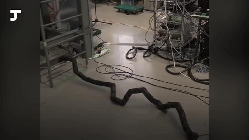 В Японии создали робота-змею, который умеет забираться по лестницам