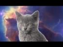 Крутая песня Про Кошек.mp4