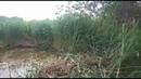 Пруд в Электроизоляторе Раменского района. Очистка от камыша.