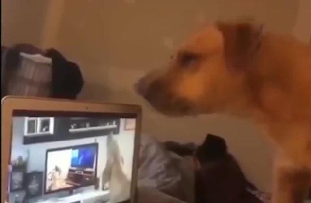 Endless Doggo