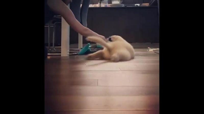 Sava ayudando a pulir el piso