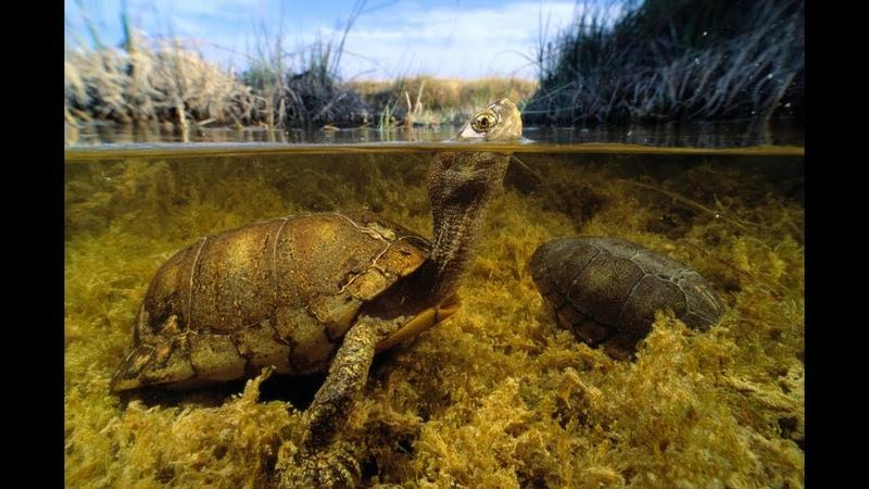 Подводная охота Вода как стекло видимость 100% (Встреча с черепашкой)