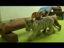 В пекинском парке собака стала матерью трех тигрят, двух гиен и львенка.