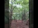 Воронцовский парк. Моё видео 😊