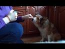 Учим собаку аккуратно брать лакомство