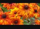 Цветы, для солнечной клумбы !