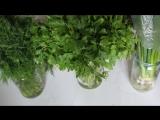 Как сохранить свежую зелень петрушки и укропа