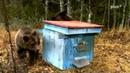 Улей и медведи Hive and bears
