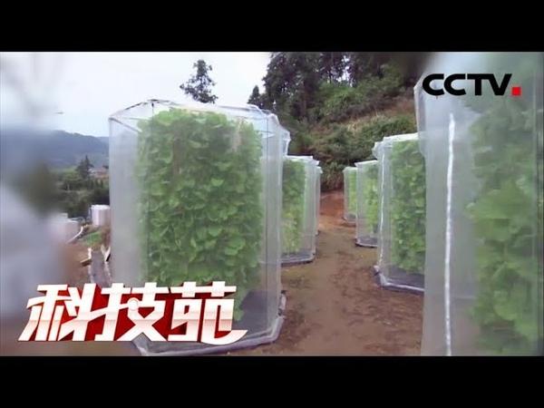 《科技苑》 20171218 蔬菜摞着长 亩产增三倍 CCTV农业