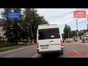 Вежливые свободненские собаки переходят дорогу по зебре