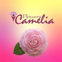 Логотип Доставка цветов в Самаре/Цветы/Camelia Flowers