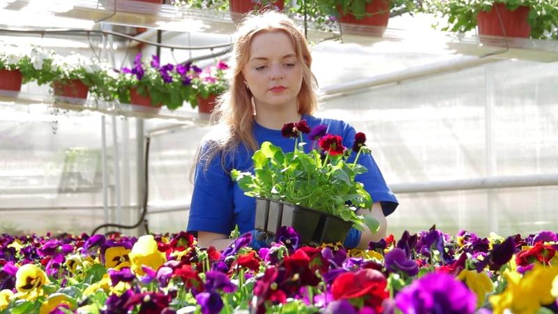 Презентационный фильм для АО Совхоз-Весна