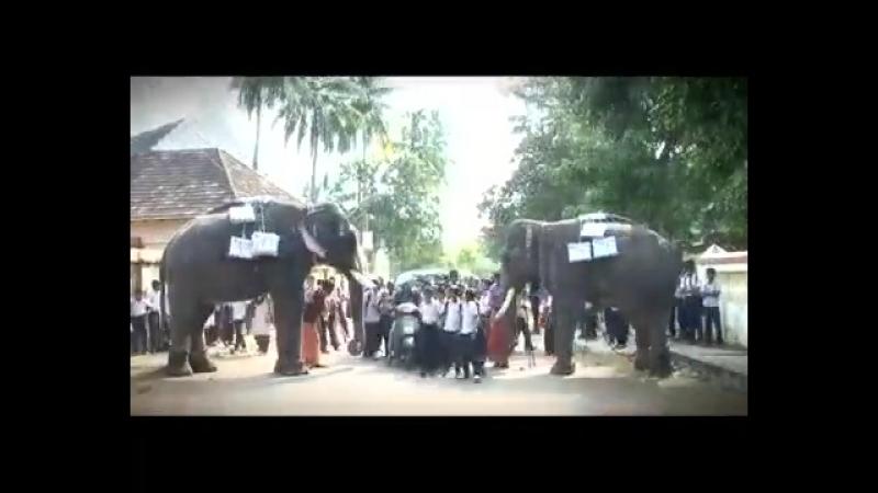 Доставка почты в Керале