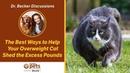 Лучшие способы помочь упитанной кошке сбросить лишние килограммы / The Best Ways Help Your Overweight Cat Shed the Excess Pounds