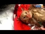 Пожарные спасли кота из горящего здания в Москве
