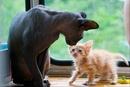 О кошках…