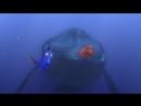 В поисках Немо - Китовий язык
