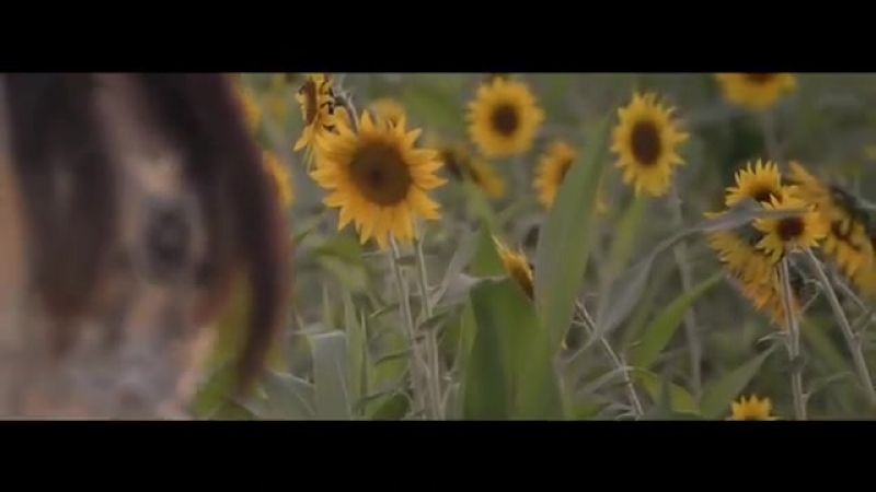Jasurbek Jabborov va Dilnoza Akbarova - Azizim - Жасурбек Жабборов ва Дилноза Акбарова - Азизим.mp4