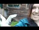 Муравьевский парк. Канозава танец Японского журавля