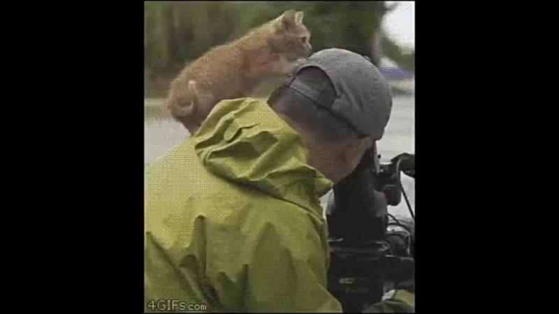 Как кошки выбирают себе человека_grin_ - nemnozkhokoshka - cats - коты - немножкокошка ( 554 X 480 ).mp4