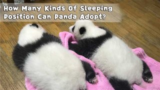 How Many Kinds Of Sleeping Position Can Panda Adopt? | iPanda