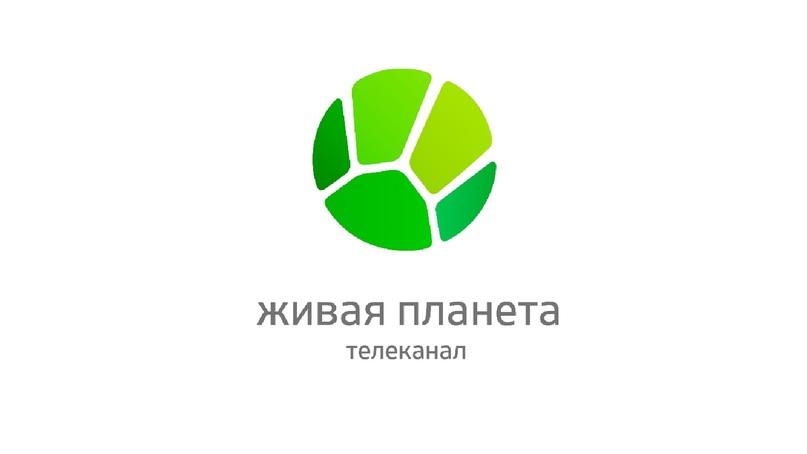https://pp.userapi.com/c845418/v845418163/8d242/a9nbnGHQDrE.jpg