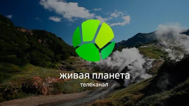 https://pp.userapi.com/c845418/v845418163/8d255/TF97WL0Dmaw.jpg