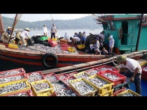 Nhật ký đi biển 5 -đánh bắt cá được mẻ cá cò 30 tấn