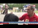 Мокрый нос и умный взгляд Международная выставка собак Звёзды Пантикапея впервые прошла в Керчи
