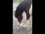 Лошадка и кисуля