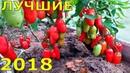 ЛУЧШИЕ СОРТА ОВОЩЕЙ 2018 года