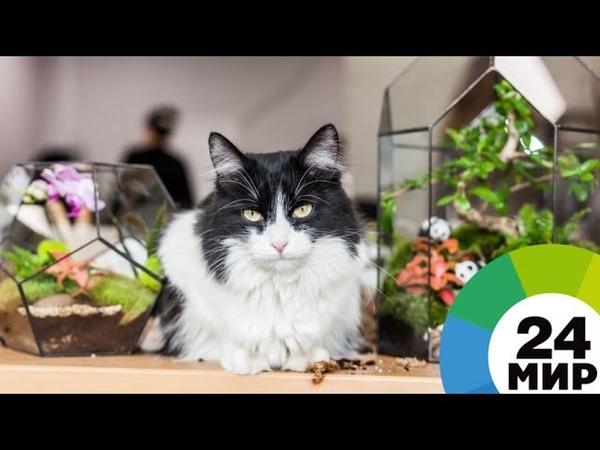 Кот из Санкт-Петербурга исполнил грузинскую песню - МИР 24