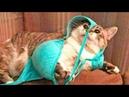 Приколы с Котами - Смешные коты и кошки 2018 ТЕСТ НА ПСИХИКУ, ПРОБУЙ НЕ СМЕЯТЬСЯ!