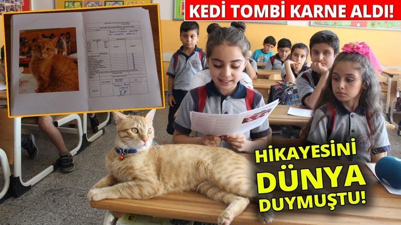 Kedi Tombi Karne Aldı...Fenomen Kedi Tombinin Dersleri Pekiyi