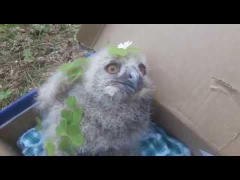 Счастливая совушка \ Happy owl