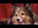 Приколы. Смотреть лучшие приколы.Моя любимая супер собака!..