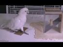 Умная птица