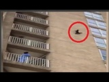 Brave raccoon in Ocean City, New Jersey, was seen scaling a building