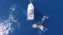 Танец китов вокруг яхты у берегов Новой Каледонии в Тихом океане