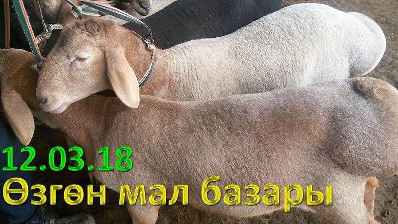 Скотный рынок, Узген |12.03.18| гиссарская порода Цены на овец,