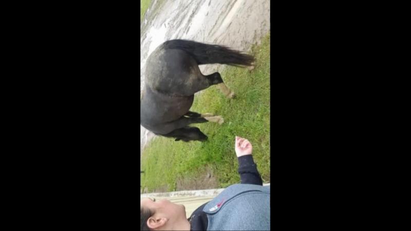 Video_2017-09-21T18.29.04.mp4