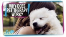 Why Does Pet Therapy Work? (It's Not Just Cute Dogs)