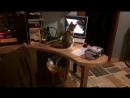 Феда смотрит фильм про кошек
