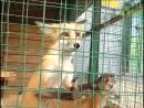 Ребусы изагадки. В самарском зоопарке участники семейного квеста погрузились в мир знаний о диких животных