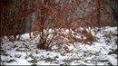 Зима приходит на смену осени зимняя погода первый снег