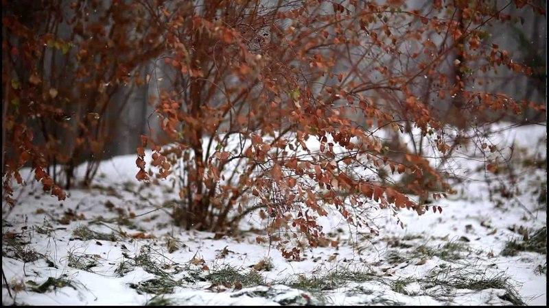 Зима приходит на смену осени, зимняя погода, первый снег