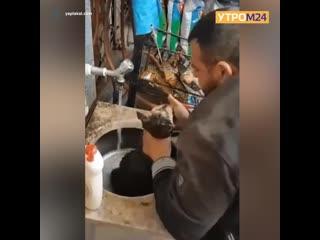 Житель Турции спас умирающего щенка — Утром24