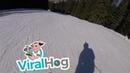 Ski Run Interrupted by Moose || ViralHog